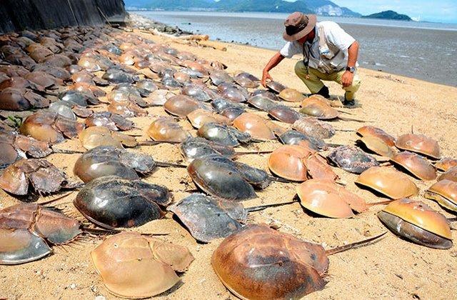 Sam chết bất thường kín đặc bờ biển Nhật Bản - 1