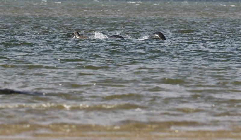 Bức ảnh thuyết phục nhất chụp quái vật hồ Loch Ness - 1