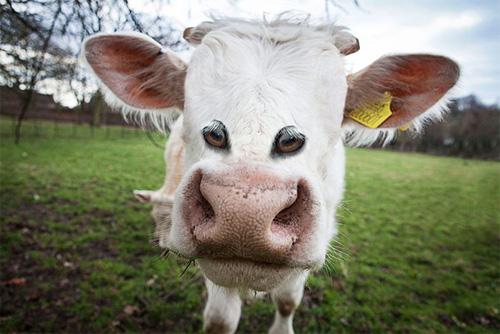 Đôi mắt mọc lệch khiến các con vật này trở nên hài hước - 1