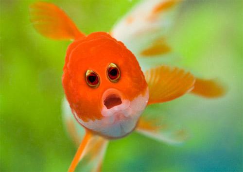 Đôi mắt mọc lệch khiến các con vật này trở nên hài hước - 8