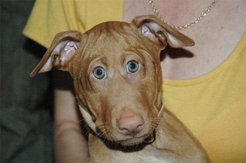 Đôi mắt mọc lệch khiến các con vật này trở nên hài hước - 10
