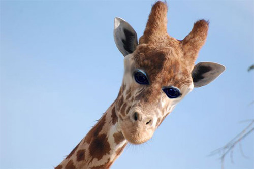 Đôi mắt mọc lệch khiến các con vật này trở nên hài hước - 11