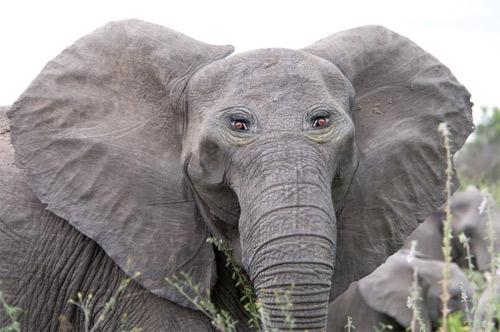 Đôi mắt mọc lệch khiến các con vật này trở nên hài hước - 14