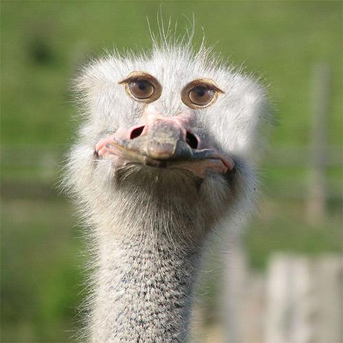Đôi mắt mọc lệch khiến các con vật này trở nên hài hước - 15