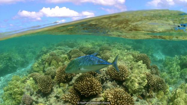 Kho báu chưa được khám phá ở Hawaii - 4