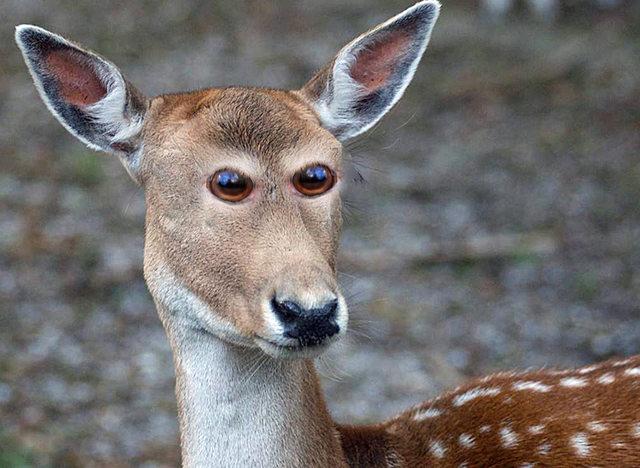 """Động vật trở nên """"kinh dị"""" khi mắt nằm trước mặt như người - 8"""
