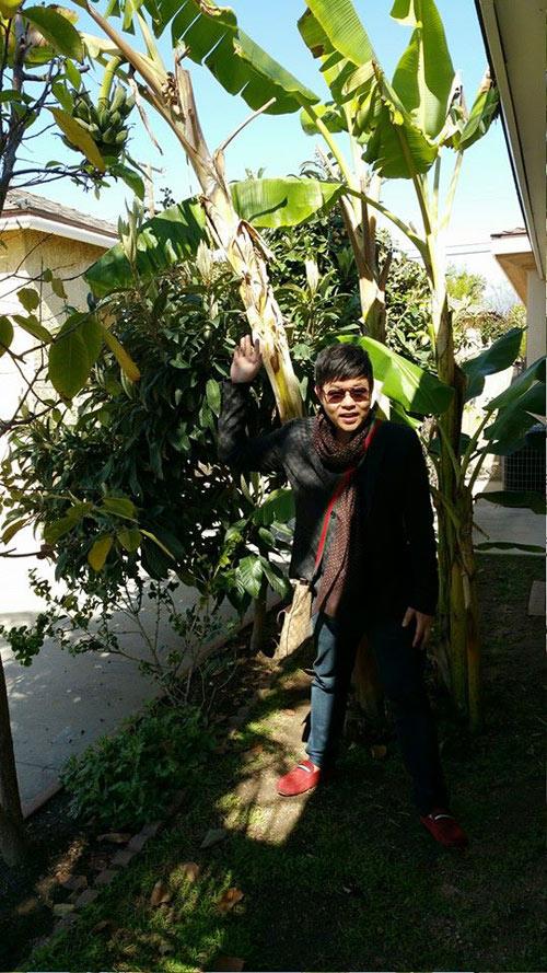 Cận cảnh vườn cây sai trĩu quả trong nhà Quang Lê ở Mỹ - 12
