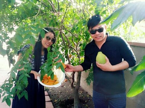 Cận cảnh vườn cây sai trĩu quả trong nhà Quang Lê ở Mỹ - 8