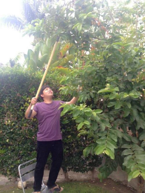 Cận cảnh vườn cây sai trĩu quả trong nhà Quang Lê ở Mỹ - 15