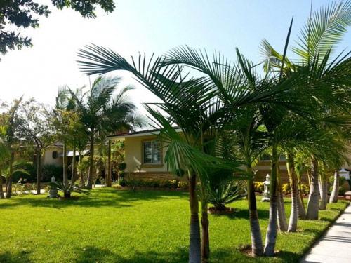 Cận cảnh vườn cây sai trĩu quả trong nhà Quang Lê ở Mỹ - 4
