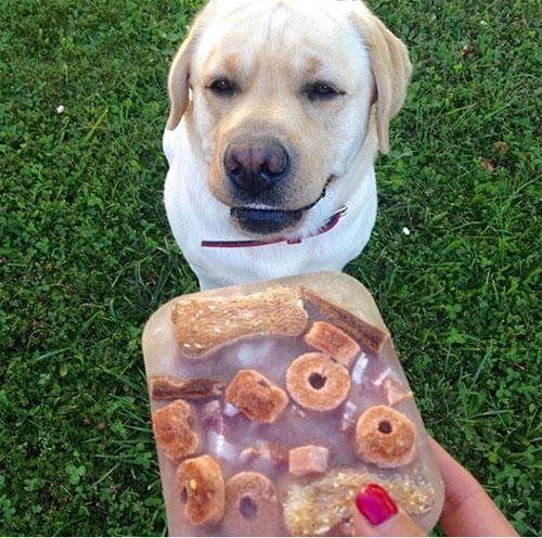 Những chú chó khổ sở vì bị chủ làm khó - 1