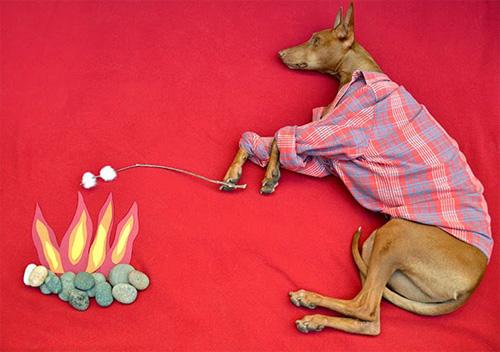 Những chú chó khổ sở vì bị chủ làm khó - 4