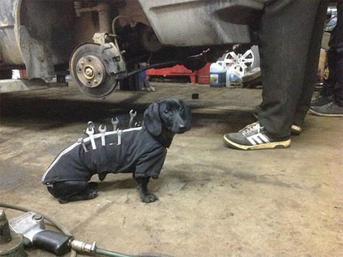 Những chú chó khổ sở vì bị chủ làm khó - 5