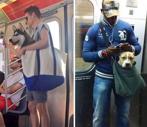 Những chú chó khổ sở vì bị chủ làm khó - 10