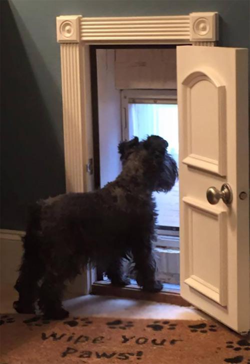 Những chú chó khổ sở vì bị chủ làm khó - 11