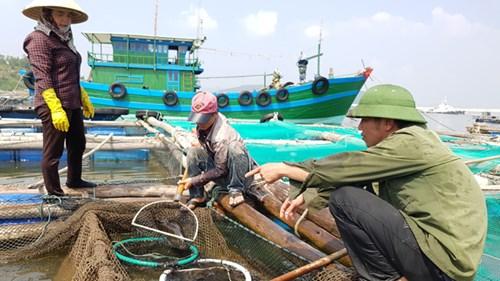 Cá chết ở biển Thanh Hóa: Có lặp lại kịch bản Formosa? - 3