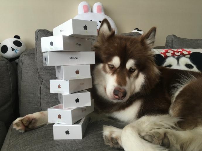 Thiếu gia giàu nhất TQ mua 8 chiếc iPhone 7 cho chó cưng - 1