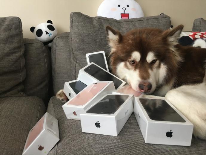 Thiếu gia giàu nhất TQ mua 8 chiếc iPhone 7 cho chó cưng - 2