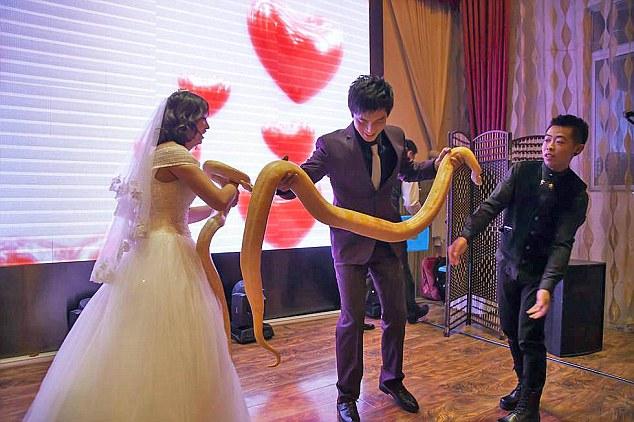 Cặp đôi TQ trao nhau trăn khổng lồ thay nhẫn cưới - 1