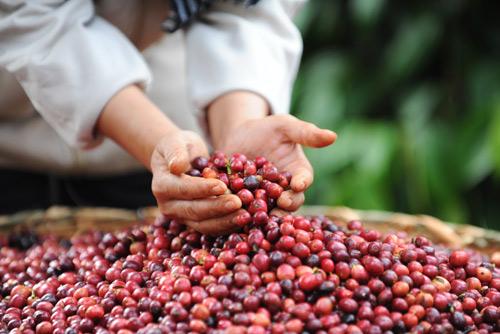 Cà phê trộn đậu nành liệu có tốt cho sức khỏe? - 2