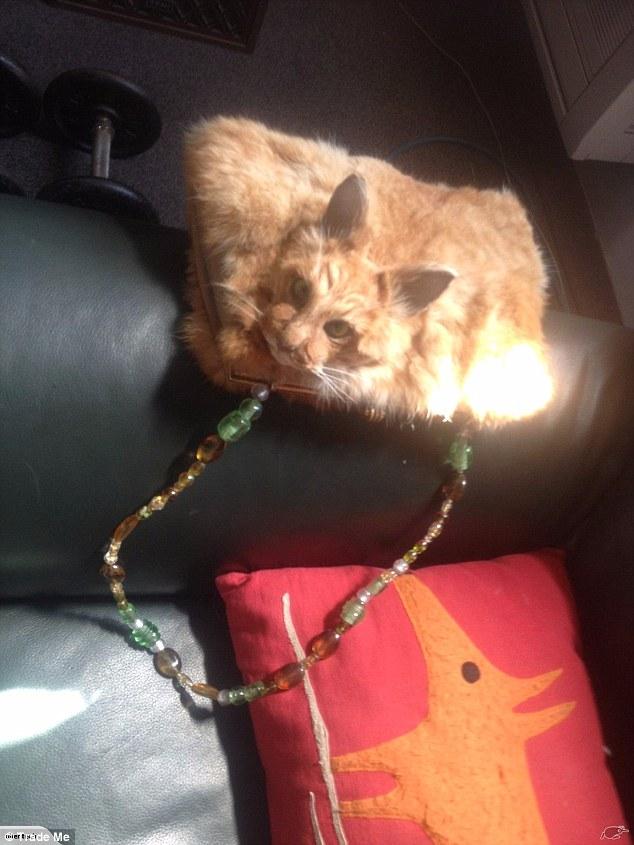 Túi xách bệnh hoạn làm từ... nguyên con mèo chết rao bán 30 triệu đồng - 1