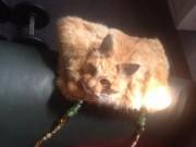 Phi thường - kỳ quặc - Túi xách bệnh hoạn làm từ... nguyên con mèo chết rao bán 30 triệu đồng