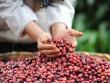 Cà phê trộn đậu nành liệu có tốt cho sức khỏe?