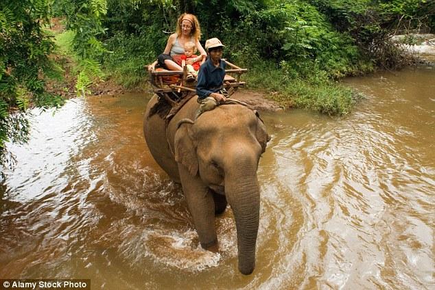 """Campuchia: Voi giết chủ rồi lao theo """"bạn gái"""" vào rừng - 3"""