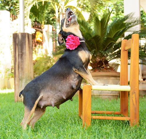 Cô chó điệu đà tạo dáng khoe bụng bầu - 1