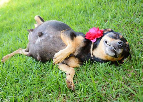 Cô chó điệu đà tạo dáng khoe bụng bầu - 3