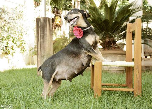 Cô chó điệu đà tạo dáng khoe bụng bầu - 8