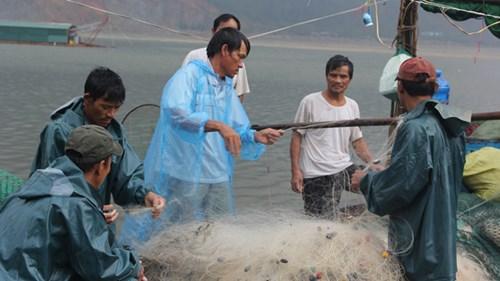 Rất khó phân biệt cá sạch và cá nhiễm độc - 2