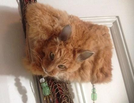 Túi xách 'kinh dị' đính đầu mèo có giá nghìn đô - 1