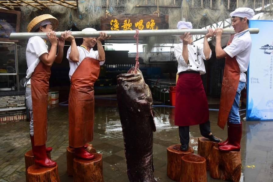Cá mú khổng lồ nặng hơn 2 tạ sa lưới ngư dân Trung Quốc - 1