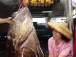 Cá mú khổng lồ nặng hơn 2 tạ sa lưới ngư dân Trung Quốc