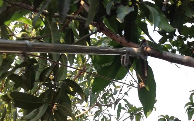 Đi chặt cây bị cành cây đâm thủng bụng - 1