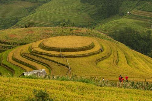 Những triền đồi vàng rực đẹp mê hồn ở Mù Cang Chải - 2