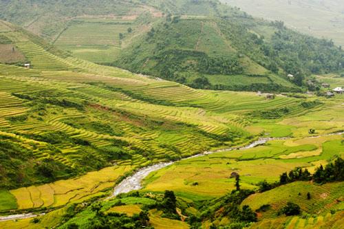 Những triền đồi vàng rực đẹp mê hồn ở Mù Cang Chải - 9