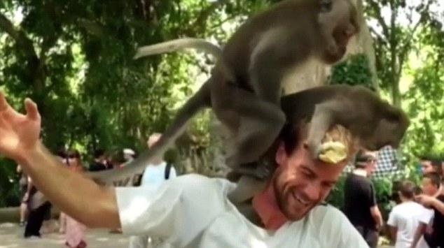 """Cặp khỉ nổi hứng làm """"chuyện ấy"""" ngay trên đầu du khách - 1"""