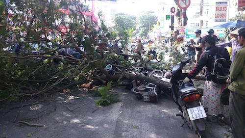 Cây xanh gãy nhánh đè 3 xe máy ở trung tâm Sài Gòn - 1