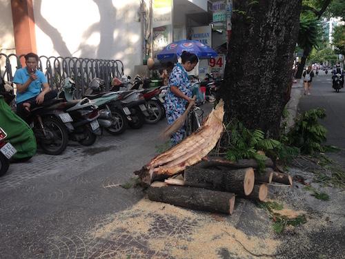Cây xanh gãy nhánh đè 3 xe máy ở trung tâm Sài Gòn - 3
