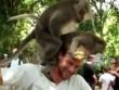 """Cặp khỉ nổi hứng làm """"chuyện ấy"""" ngay trên đầu du khách"""