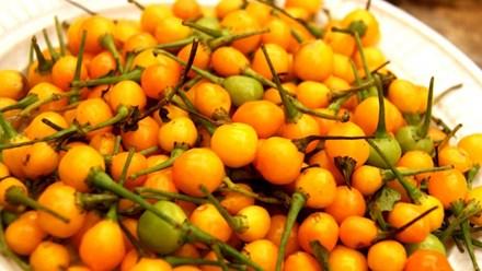 Hốt hoảng với loại ớt giá gần 600 triệu đồng một cân - 1