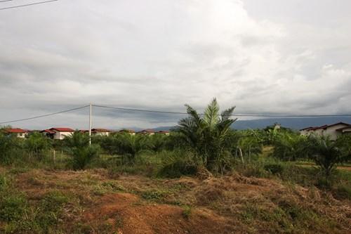 Nếu Hoàng Anh Gia Lai bán cao su tại Lào… - 4