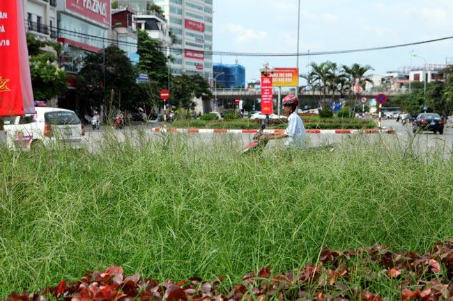 Chủ tịch Hà Nội giải thích việc dừng chi tiền cắt cỏ - 1