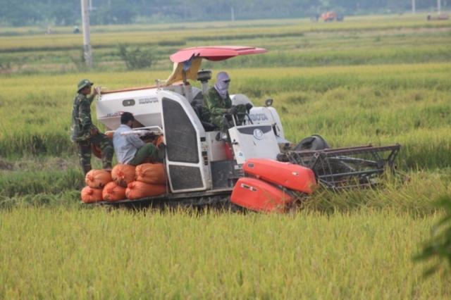 Đi gom rơm, người phụ nữ bị máy gặt lúa cán chết - 1