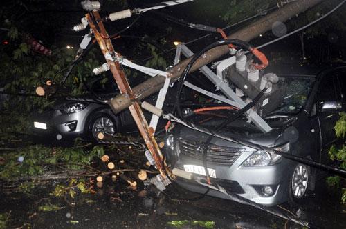 Cây bật gốc đè 7 ô tô, nhiều người tháo chạy trong mưa - 1