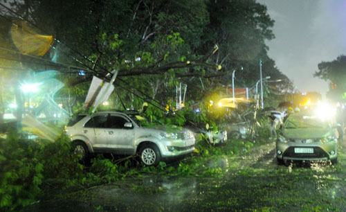 Cây bật gốc đè 7 ô tô, nhiều người tháo chạy trong mưa - 5