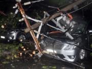 Cây bật gốc đè 7 ô tô, nhiều người tháo chạy trong mưa