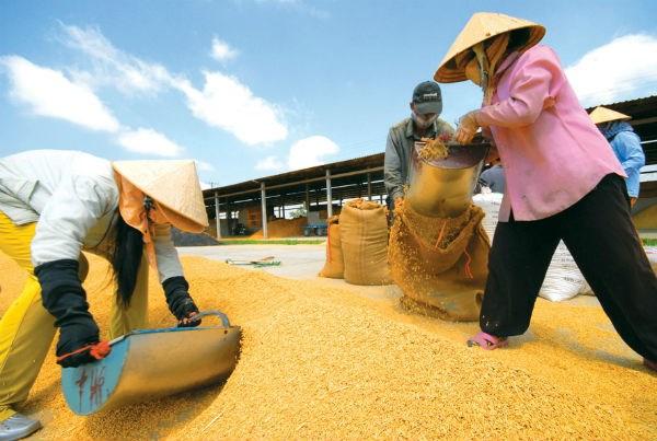 ADB: Nông nghiệp sụt giảm kéo tăng trưởng kinh tế VN xuống 6% - 1